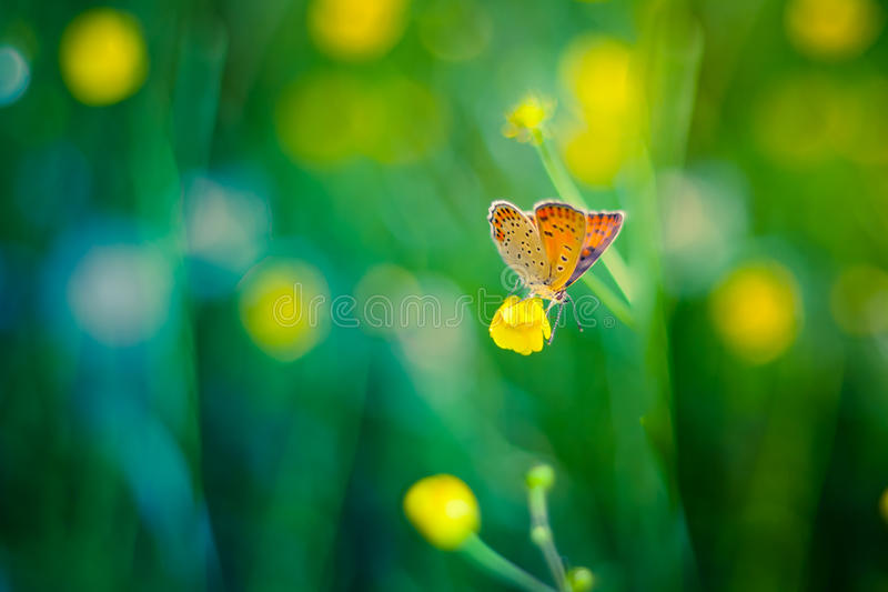 Beautiful butterfly and flowers. Shallow background and bokeh balls. Summer background with yellow flowers and fresh green grass royalty free stock images