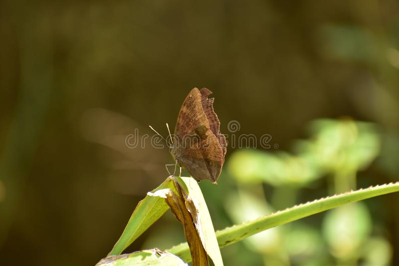 Beautiful butterfly on the green leaf stock photo