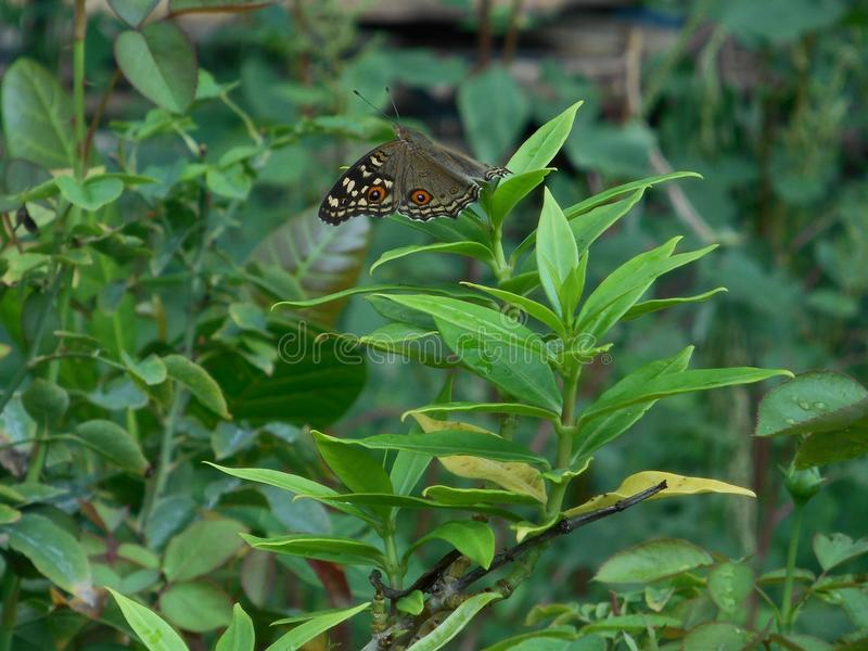 Butterfly, insect, leaves, Plant, nature stock photos