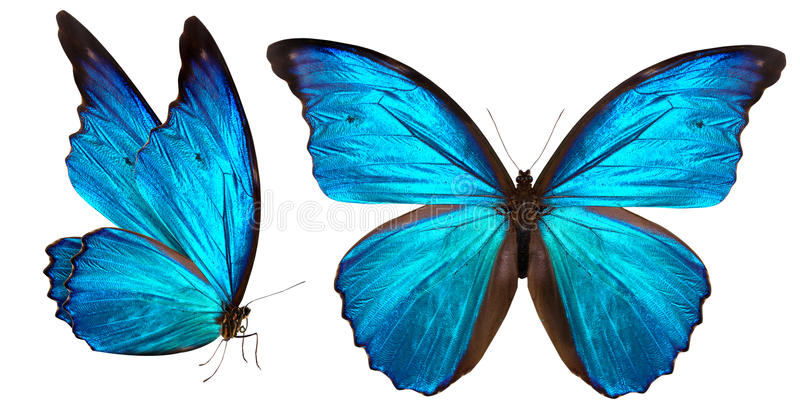 Download Beautiful Butterfly Isolated On White Stock Photo - Image: 35778780
