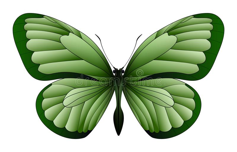 Beautiful butterfly isolated on a white background stock illustration