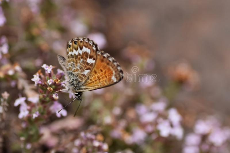 Beautiful butterfly matching with background stock photography