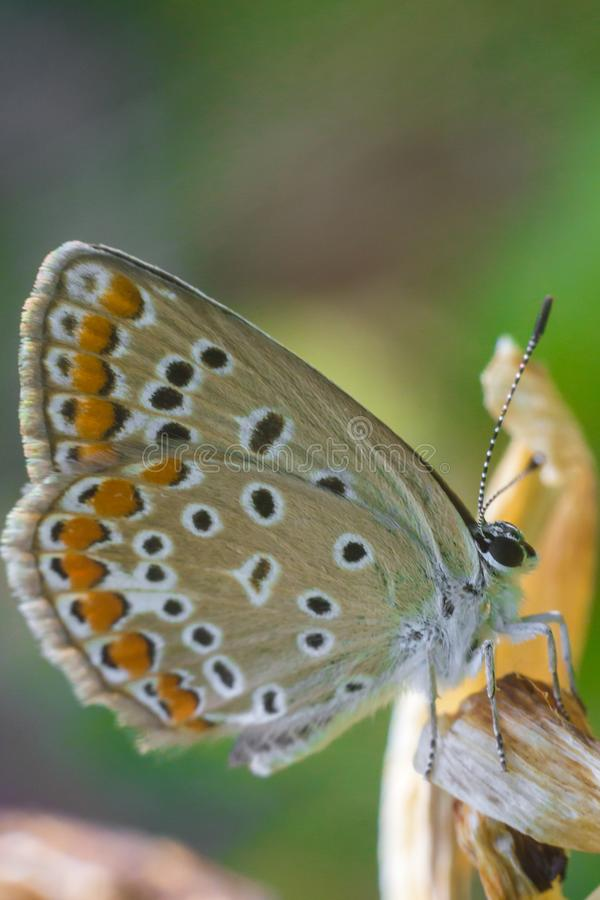 Beautiful butterfly on a natural background vertically stock image
