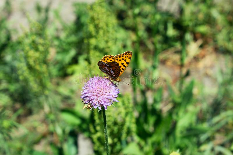 Butterfly sits on a flower in the grass. royalty free stock photo