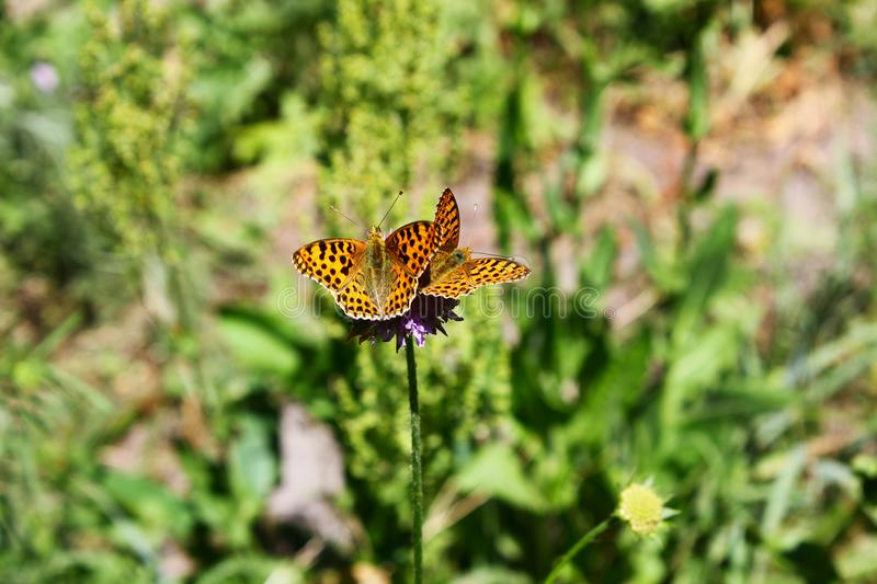Butterfly sits on a flower in the grass. stock image