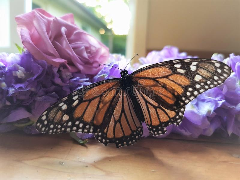Beautiful butterfly sits on flower with open wings patern. Beautiful butterfly sits on flower in the daytime with open wings .Butterfly wing pattern. Butterfly royalty free stock photo