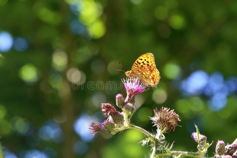 Beautiful butterfly sitting on flower in garden royalty free stock images