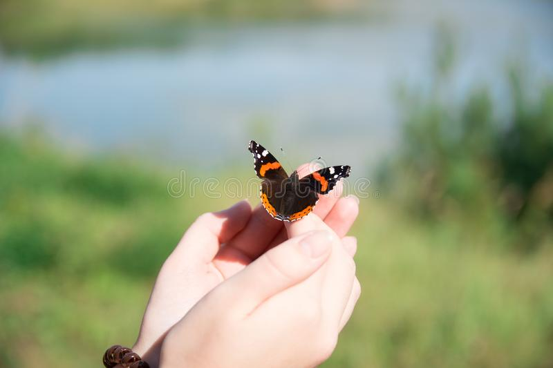 Beautiful butterfly sitting on the girl hand stock photo