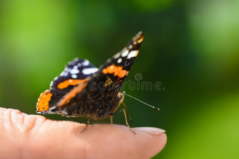 Bright colorful butterfly in wings on a human finger on a green background royalty free stock image