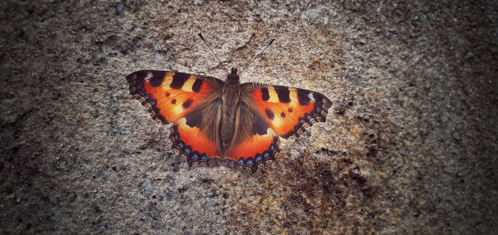 Beautiful butterfly on the wall. royalty free stock photos