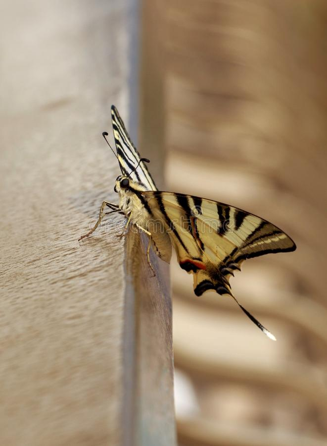 Beautiful butterfly for wallpaper. View of beautiful butterfly with open wings perched on railing for mobile wallpaper royalty free stock image