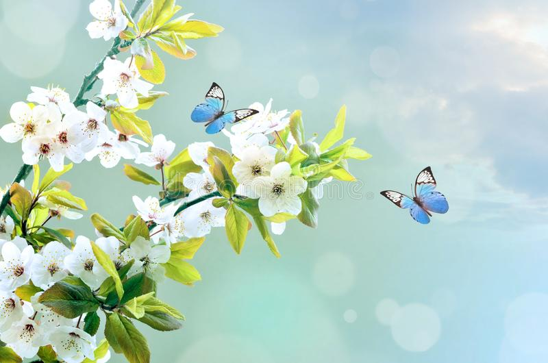 Beautiful butterfly on white flower, sky background.  royalty free stock photography