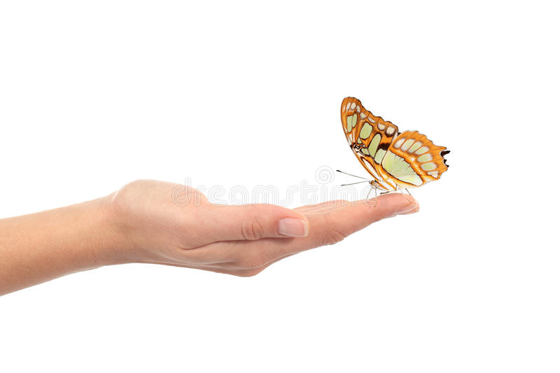 Beautiful butterfly on a woman hand. Isolated on a white background stock photos