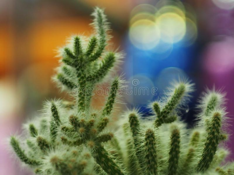 Beautiful cactus from close range stock image