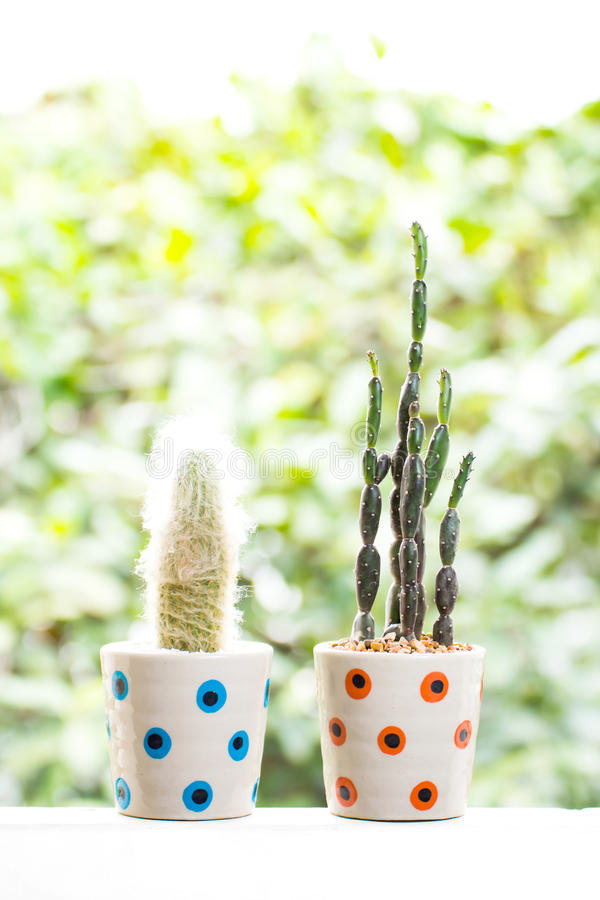 Beautiful Cactus in a cup royalty free stock photography