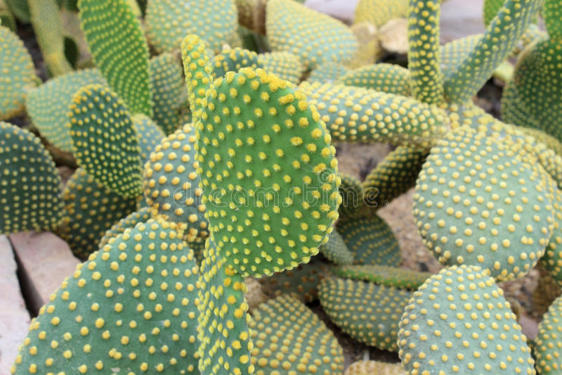 Beautiful cactus. In the garden stock images