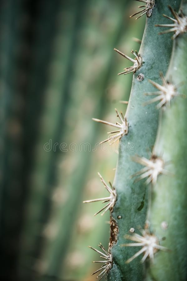 Beautiful Cactus in the garden, close up detail. Very green royalty free stock photos