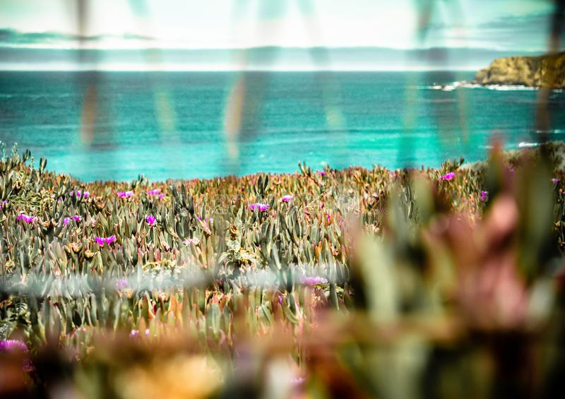 Beautiful Califonia Coast Landscape Shot royalty free stock photo