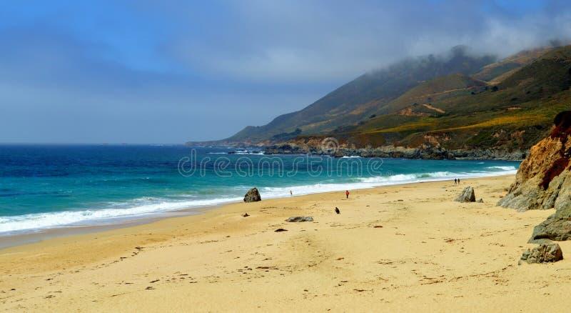 California Beach. Beautiful California beach with sand dunes covered in flowers stock photos