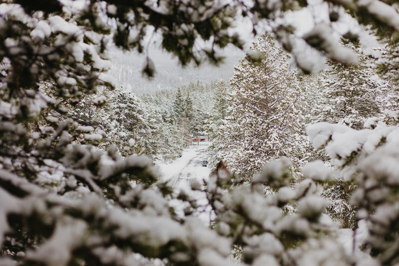 Beautiful Calm and Peaceful Frozen Cold Winter Season Snow in Breckenridge Colorado Landscape Scene of Fir Pine Trees in Outdoor N stock photography