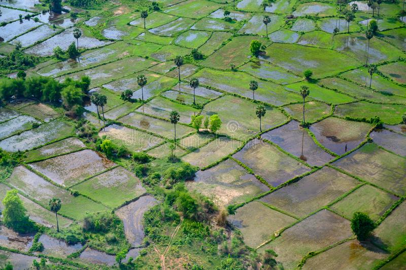 Rice fields, coconut palms, beautiful landscape, Cambodia. Aerial view of agrarian fields, Asia royalty free stock photo