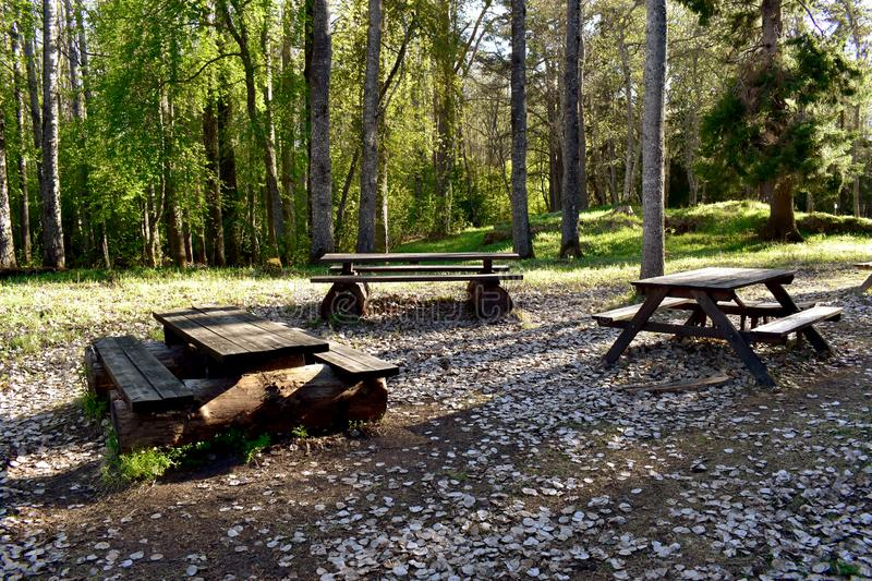 Camping place in a forest royalty free stock photo
