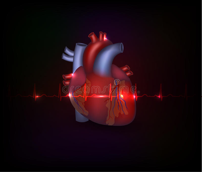 Beautiful cardiology heart design and normal cardi stock illustration