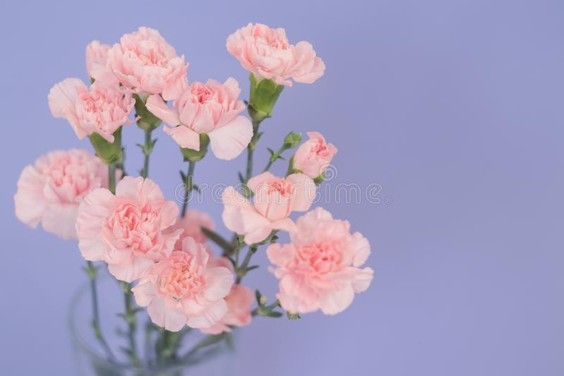 Beautiful carnation flowers into a glass on the flat lay background. Spring`s concept. Top view stock image