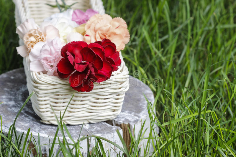 Beautiful carnation flowers in a white wicker basket. Party decoation stock photography