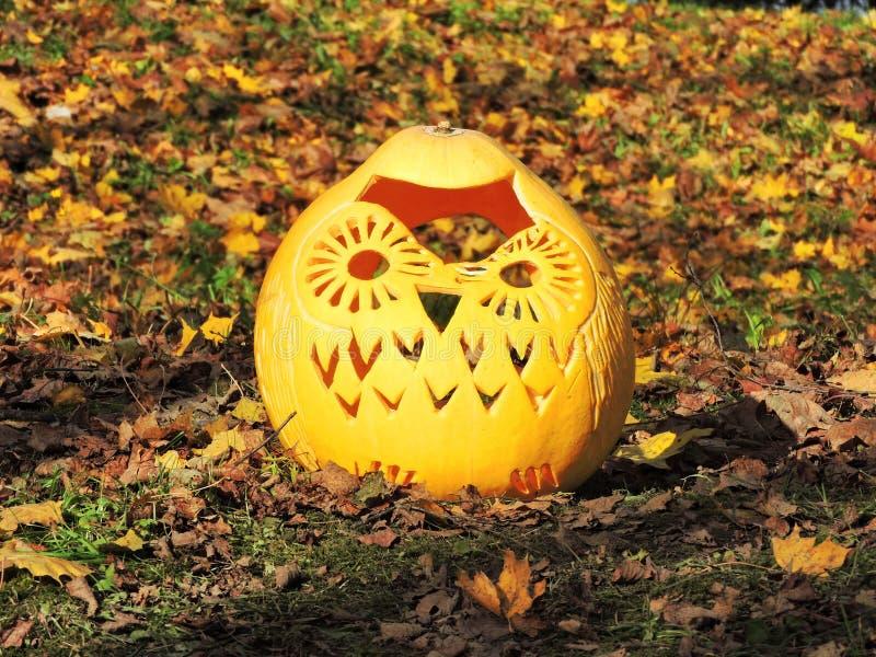 Orange halloween pumpkin - owl stock photos
