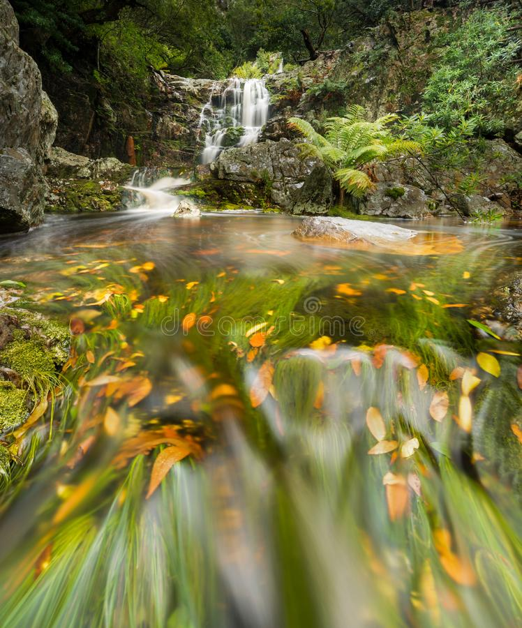 Lush green forest with cascading waterfall with fall leaves in the water. Beautiful cascading waterfall with fall leaves in Betty`s Bay Harold Porter botanical stock photo