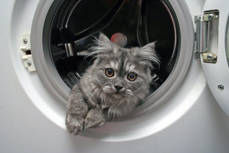 Beautiful cat. Cat in laundry machine
