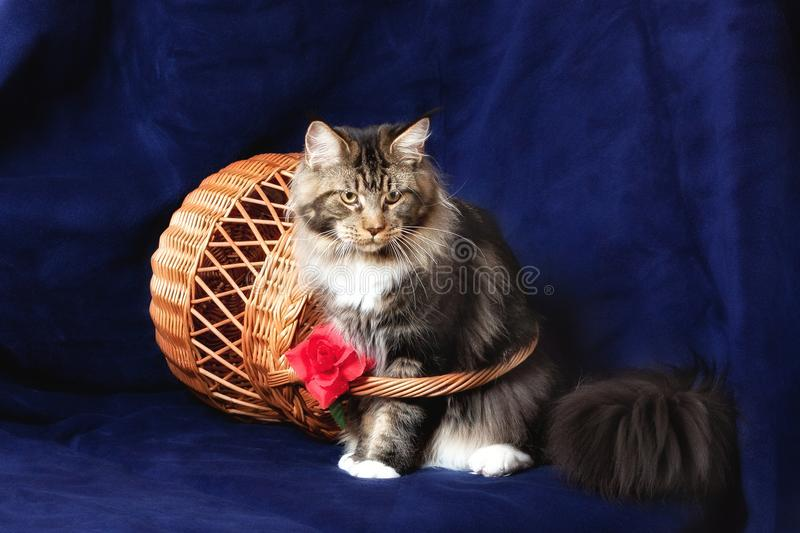 Beautiful Cat Stock Image