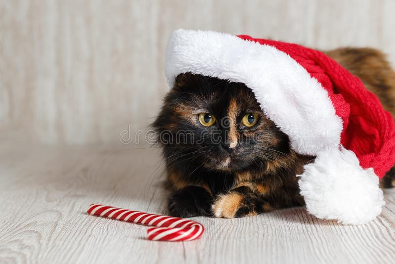 Beautiful cat in a Christmas cap lies near the candy on the wooden background.  stock photography