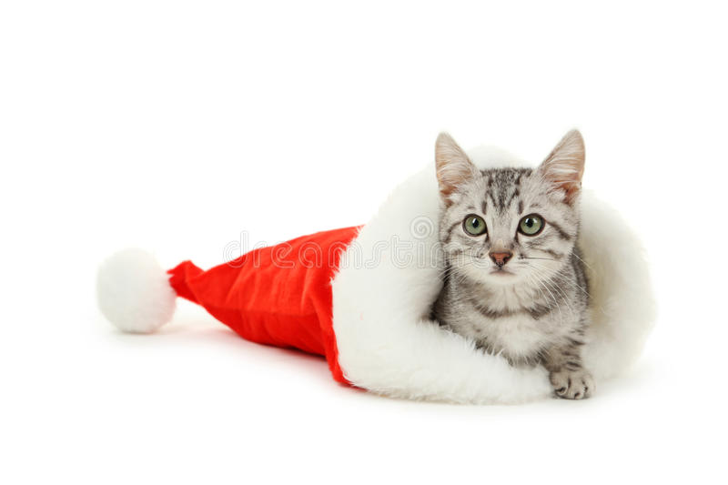 Beautiful cat in christmas hat isolated on white background stock image
