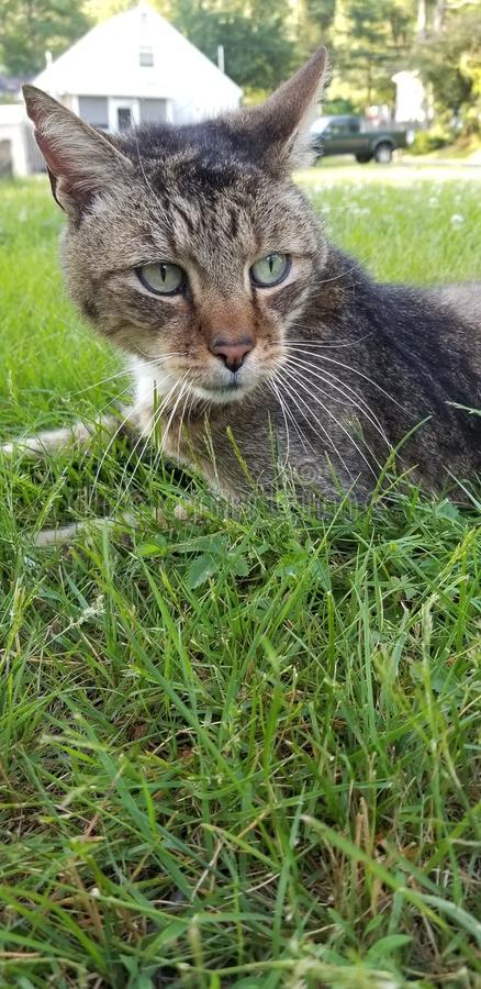 Beautiful Cat in the Grass stock images