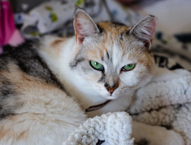 Beautiful cat is sitting in a baby bed stock photo