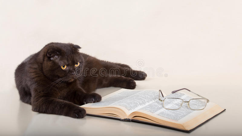 Beautiful cat. Is lying on white background with book and glasses stock photo