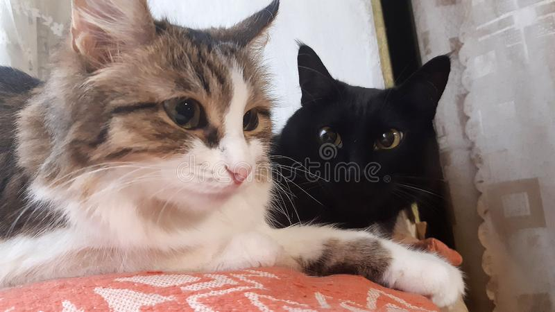Portrait of two cats, tabby and black, lying on the window royalty free stock images