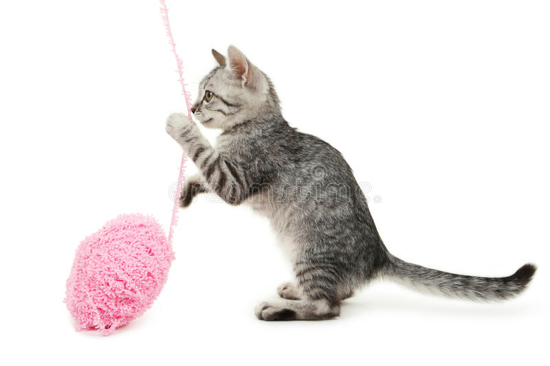 Beautiful cat with playing ball isolated on white background stock photos