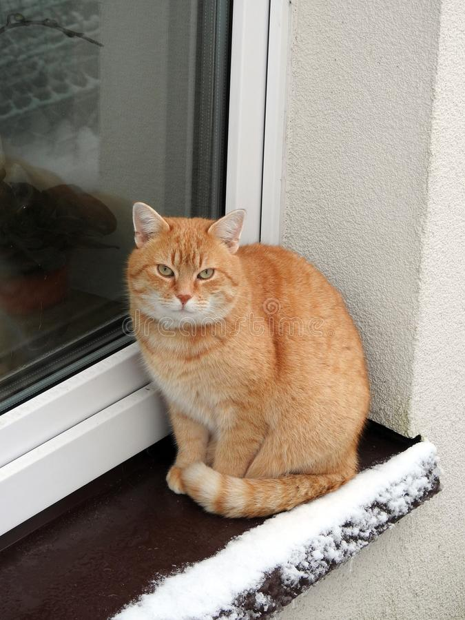 Beautiful cat sit on home window, Lithuania royalty free stock images