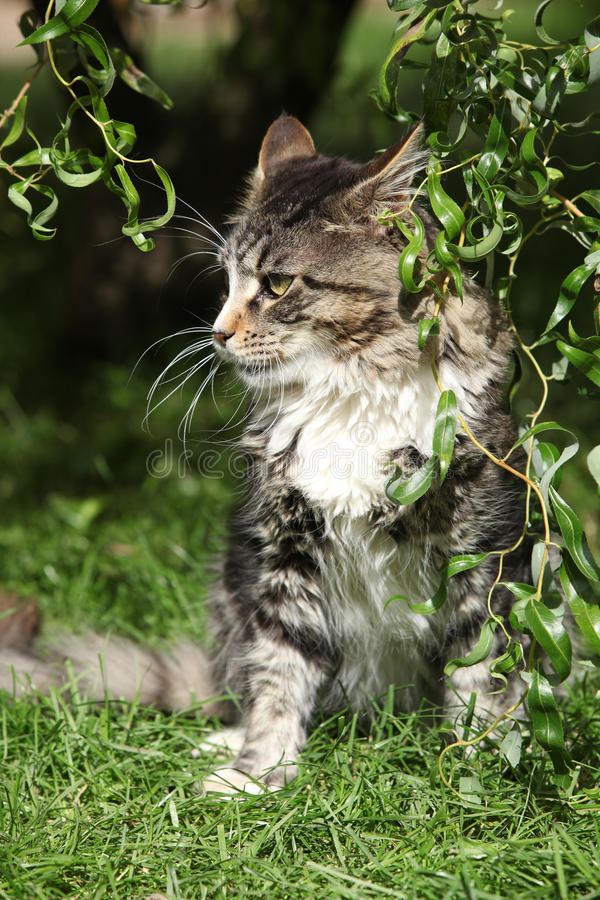 Download Beautiful cat sitting stock image. Image of tricolour - 34247577
