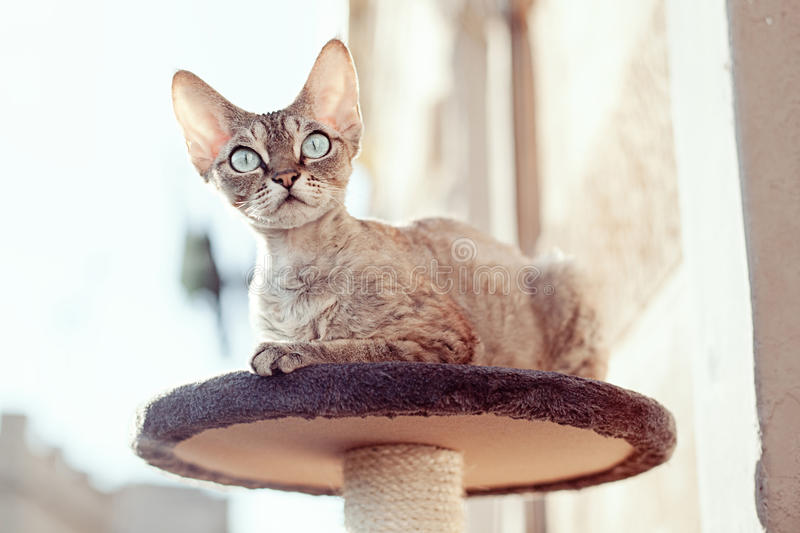 Beautiful cat sitting on the scratching post stock image