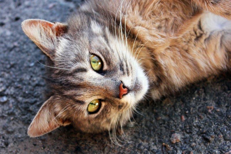 Beautiful cat on the street. stock photo