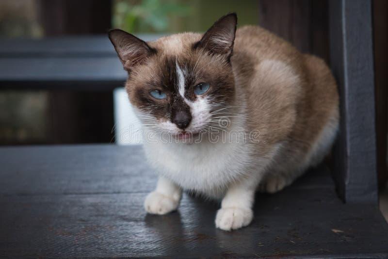 Beautiful cats royalty free stock photo