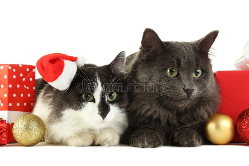 Cats with gift boxes and baubles stock photos