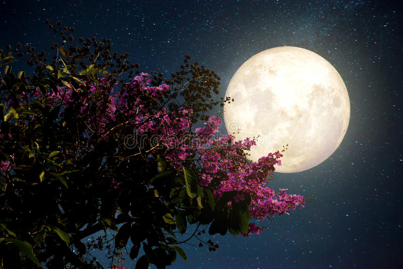 Beautiful cherry blossom sakura flowers with Milky Way star in night skies; full moon. Retro style artwork with vintage color toneElements of this moon image stock photography