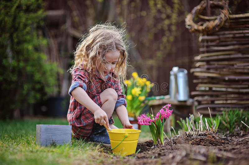 Beautiful child girl in spring garden plays and planting hyacinth flowers. Beautiful curly child girl in spring garden plays little gardener and planting stock images