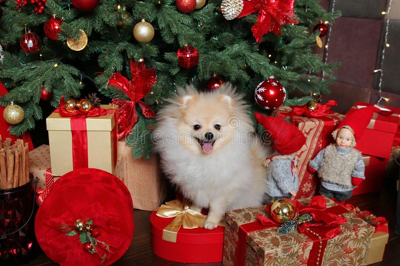 Christmas picture, symbol of the year 2018 dog. Beautiful Christmas picture, symbol of the year 2018 dog royalty free stock photos