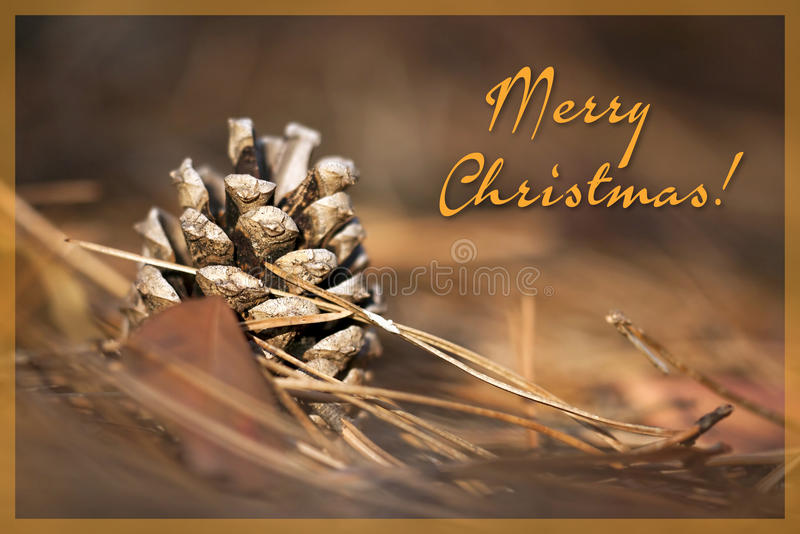 Download Beautiful Christmas Pine Cone Stock Image - Image: 34862301
